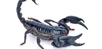 Cualidades que Destacan a Escorpio